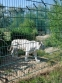 Wight-2013. The white Tiger.