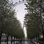 London Eye in bloom