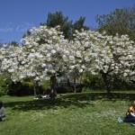 Hyde Park...